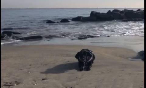 Πώς ένας σκύλος «καταστρέφει» ένα υπέροχο πλάνο της θάλασσας (vid)