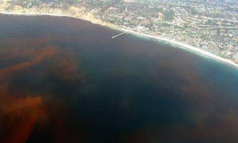 Συναγερμός στη Φλόριντα: Το «Κόκκινο Κύμα» απειλεί το περιβάλλον και τους ανθρώπους (vid)
