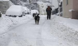 Έκτακτο δελτίο EMY: Χιόνια και στην Αττική σε λίγες ώρες (LIVE ΕΙΚΟΝΑ)