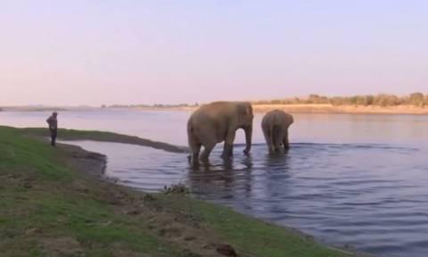 Αυτό είναι το πρώτο νοσοκομείο για ελέφαντες (vid)