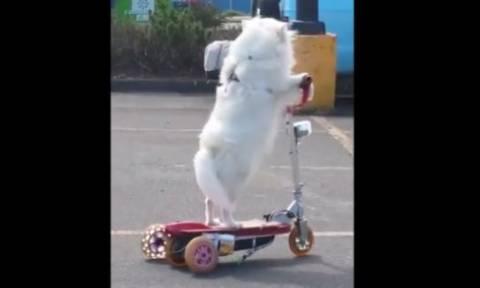 Σκύλος κάνει πατίνι και θα σας φτιάξει τη διάθεση (vid)