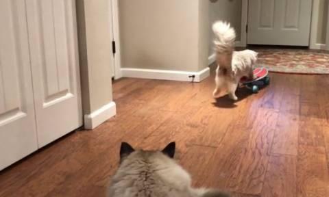 Η γάτα που προσπαθεί να μάθει… σκέιτμπορντ (vid)