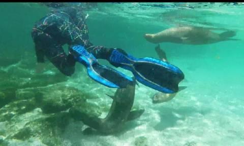 Θαλάσσιοι λέοντες κολυμπούν μαζί με ανθρώπους (vid)