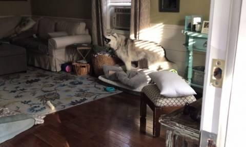 Ο πιο επίμονος σκύλος που έχετε δει! (vid)