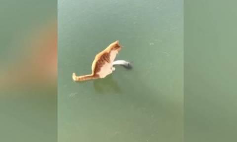 Επικό βίντεο! Γάτα προσπαθεί να πιάσει ένα ψάρι σε… παγωμένη λίμνη (vid)