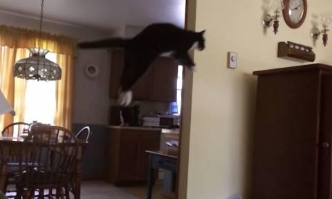 Γάτες σε… slow motion (vid)