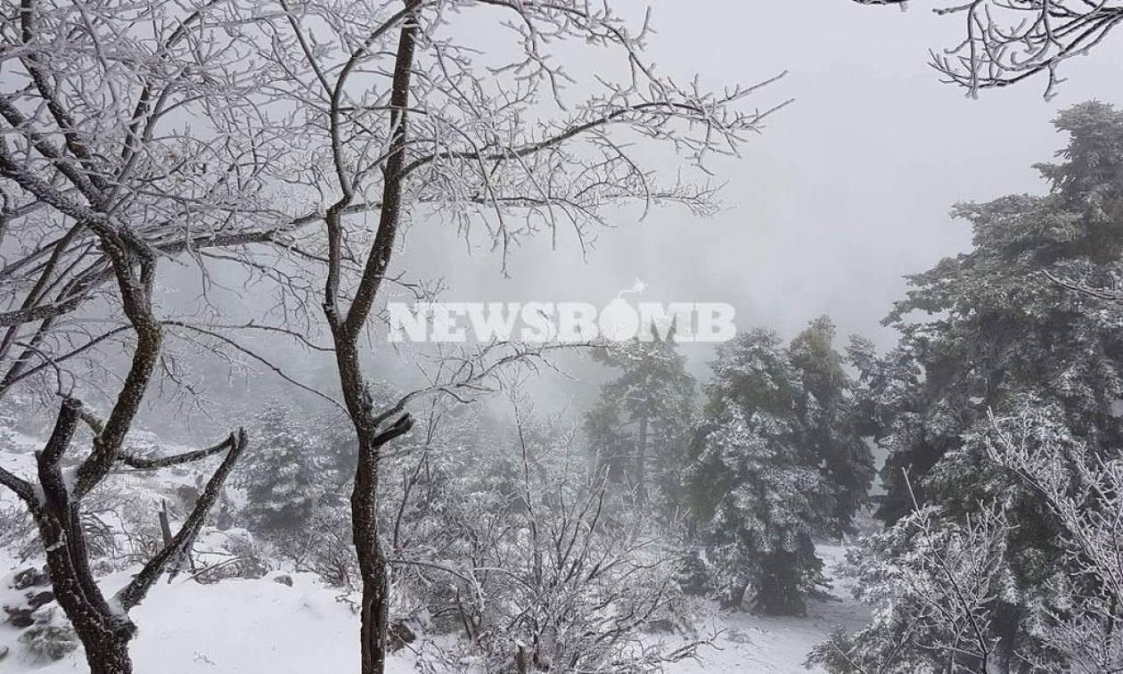 Καιρός: Χιόνιζε όλη νύχτα στην Πάρνηθα – Λευκό τοπίο στο βουνό της Αθήνας (pics+vids)