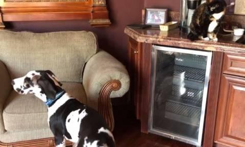 Η γάτα που πληγώνει τα συναισθήματα ενός σκύλου που απλά θέλει να παίξει (vid)