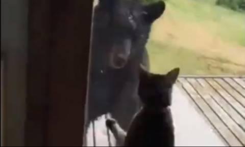 Ατρόμητη γατούλα τα βάζει με γιγάντια αρκούδα για να προστατεύσει την οικογένειά της