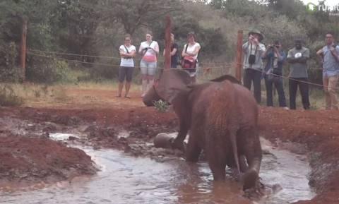 Μωρό ελέφαντας παίζει… ποδόσφαιρο (vid)