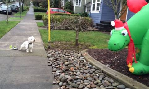 Τα σκυλιά που… μισούν τα Χριστούγεννα! (vid)