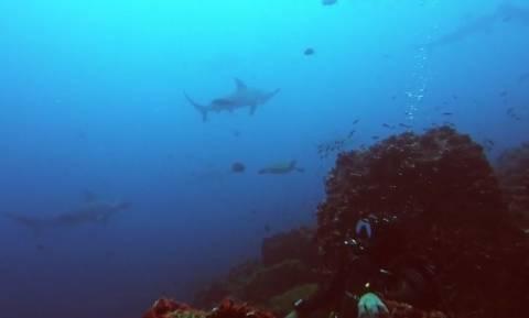 Περικυκλώθηκαν από καρχαρίες: Τι έκαναν για να γλιτώσουν (vid)