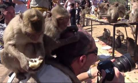 Ξεκαρδιστικό! Μαϊμούδες «επιτίθενται» στο κεφάλι φωτογράφου (vid)