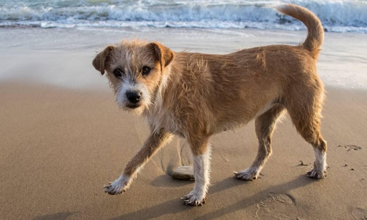 «Ημέρα Υιοθεσίας Αδέσποτων Ζώων»: Την Κυριακή 9 Δεκεμβρίου στο πάρκο «Φλοίσβος»