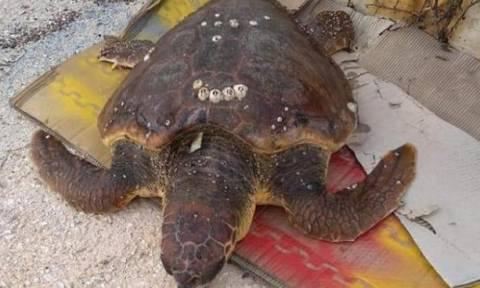 Συγκινητικό: Η διάσωση μιας καρέτα καρέτα στο Μεγανήσι (pics)