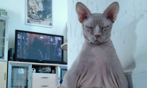 Αστείες φωτογραφίες με γάτες και σκύλους που δείχνουν ότι τα κατοικίδια έχουν... χαρακτήρα! (pics)