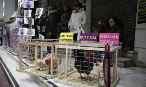 Με κότες και κοκόρια η ΠΟΕΔΗΝ στο υπουργείο Υγείας (pics)