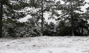 Ντύθηκε στα «λευκά» η Πάρνηθα - Συνεχίζεται η χιονόπτωση (vid& pics)