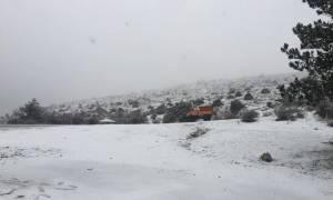 Ο χιονιάς «κύκλωσε» την Ελλάδα: Τσουχτερό κρύο και λευκό τοπίο στη μισή χώρα (pics+vid)