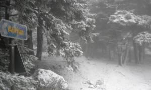 Καιρός: Η εξέλιξη των χιονοπτώσεων μέχρι την Κυριακή - Πόσα εκατοστά χιονιού θα πέσουν; (video)