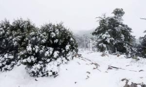Καιρός: Συνεχίζεται η επέλαση του χιονιά – Σε αυτές τις περιοχές θα χιονίσει την Παρασκευή