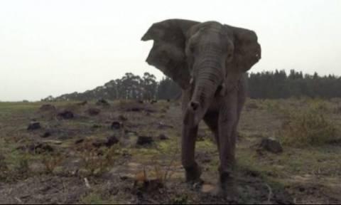 Αφιονισμένος ελέφαντας ορμάει ενάντια σε τζιπάκι με τουρίστες (vid)