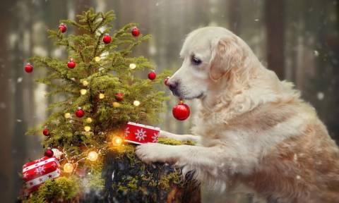 Αυτός είναι ο σκύλος που τρέλανε το διαδίκτυο (pics)
