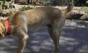 Κοζάνη: Έπαθε το σοκ της ζωής του - Βγήκε βόλτα και του επιτέθηκαν 20 αδέσποτα σκυλιά