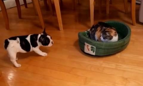 Απίστευτο γέλιο: Σαν το σκύλο με τη γάτα… στην κυριολεξία! (vid)